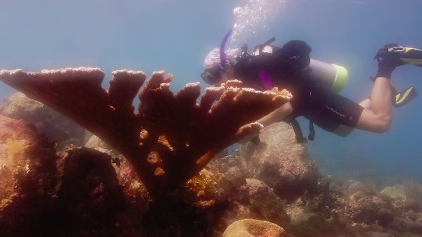 Caribbean Reef Buddy Coral Reef Montioring Project