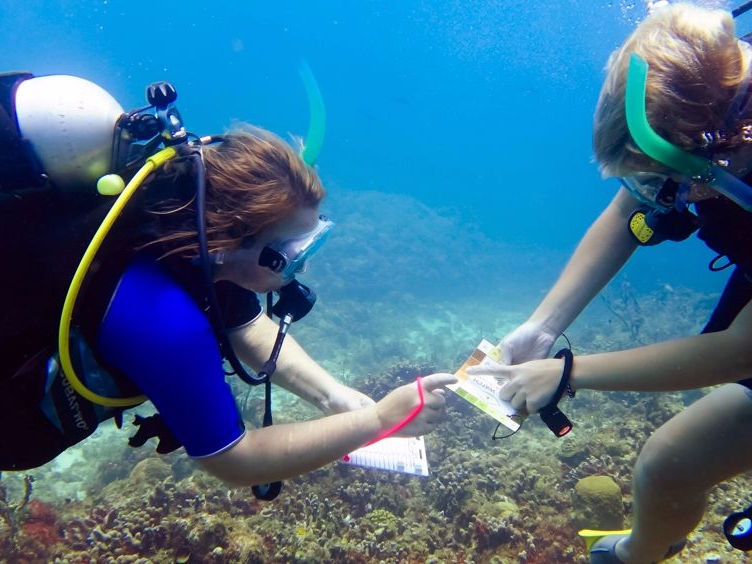 Caribbean Reef Buddy Program Overview